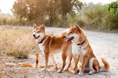 Silhouette loving dog couple Stock Image