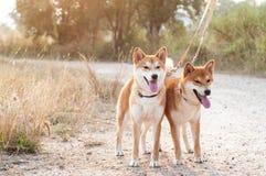 Silhouette loving dog couple Stock Photos