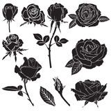 Silhouette lush rose flowers set Royalty Free Stock Photography
