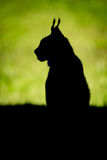Silhouette of lynx on grass in profile Royalty Free Stock Photo