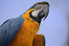 Maccaw. Silhouette of a macaw on perch Stock Image