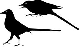 Silhouette of Magpie Stock Images