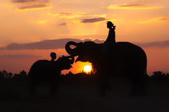 Silhouette Mahout and elephant Stock Image