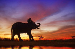 Silhouette of Mahout Royalty Free Stock Photography