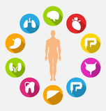 Silhouette of Male and Internal Human Organs Royalty Free Stock Photography