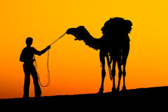 Silhouette man and camel Stock Photography