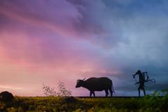 Silhouette of Man Carrying Plow While Holding the Rope of Water Buffalo Walking on Grass Field Royalty Free Stock Photo