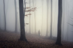 Silhouette of man in dark autumn forest with fog Stock Photos