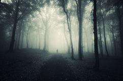 Silhouette on man in dark forest with fog Stock Photos