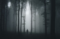 Silhouette of man in dark haunted scary forest on Halloween night. Man silhouette in dark haunted scary mysterious forest with fog on Halloween night stock photo