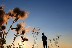Silhouette of a man flying a remote control drone. In the sunset behind wild thorn weeds Royalty Free Stock Photo