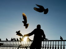 Silhouette of a man with many birds Stock Images