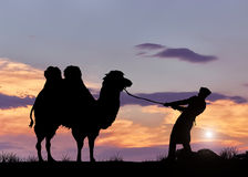 Silhouette of a man pulling a camel Stock Photos