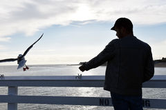 Silhouette of a man and a seagull Stock Photos