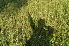 Silhouette of a man, the shadow on the grass, a field of wheat Stock Images