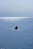 Silhouette of a Man Swimming on a Beach Stock Photo