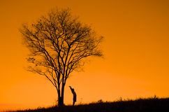 Silhouette of a man with a tree Royalty Free Stock Images