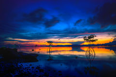 Silhouette of Mangrove in sea at sunset Royalty Free Stock Image