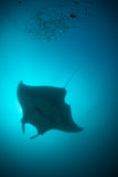A silhouette of a manta ray Royalty Free Stock Photo