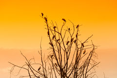 Silhouette of many birds on a treetop Royalty Free Stock Photography