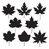 Silhouette of the maple leaf. Icons silhouette of maple leaves Stock Images