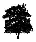 Silhouette of maple tree Royalty Free Stock Images