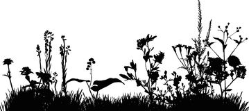 Silhouette of meadow grass Stock Photography