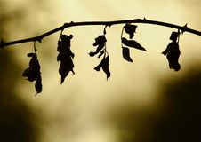 The silhouette meeting of nature royalty free stock image