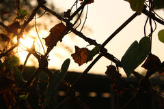 silhouette metal fence on sunset Stock Photos