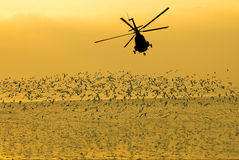 Silhouette of the military helicopter  moving into sky at sunset Stock Photos