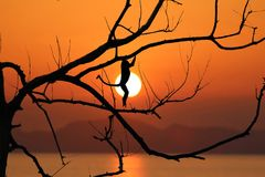 Silhouette monkey jump on the leafless trees in the evening. Silhouette monkey jump on the leafless trees and red sky sunset background in the evening stock image