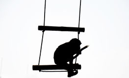 Silhouette of monkey Royalty Free Stock Images