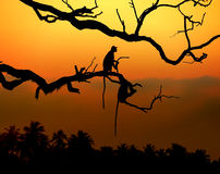Silhouette of a monkey. In sunset with palm Royalty Free Stock Images