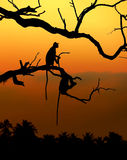 Silhouette of a monkey. In sunset with palm Stock Photos