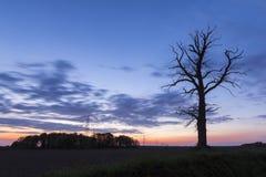 Silhouette morte d'arbre Photo libre de droits