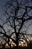 Silhouette morte d'arbre Photographie stock