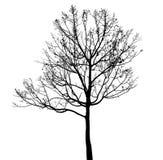 Silhouette morte d'arbre Photographie stock libre de droits