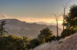 Silhouette morte d'arbre au coucher du soleil photographie stock