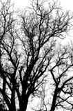Silhouette morte d'arbre sans feuilles d'isolement Images stock