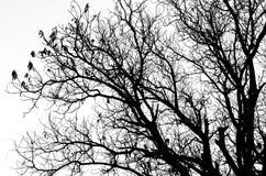 Silhouette morte d'arbre sans feuilles d'isolement sur le blanc Image libre de droits