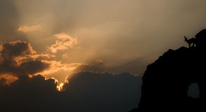 Silhouette of mountain goat at dusk. Stunning landscape - silhouette of a mountain goat at dusk Royalty Free Stock Image