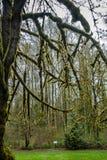 Silhouette moussue d'arbre Image stock