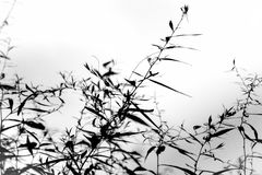 Silhouette of Nature Royalty Free Stock Image