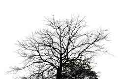 The silhouette of nature dead tree. stock image