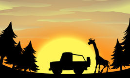 Silhouette nature scene with giraffe and jeep Royalty Free Stock Image