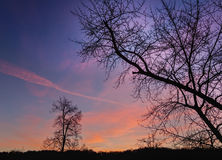 Silhouette nice winter tree of the dawn sky Royalty Free Stock Photography