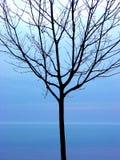 Silhouette noire d'arbre Image libre de droits