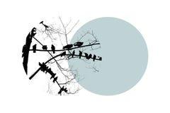 Silhouette noire d'arbre nu avec des colombes d'oiseaux sur la branche sur le cercle bleu Grande conception pour tous buts photo libre de droits