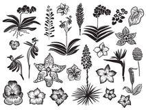 Silhouette noire de fleurs exotiques et tropicales d'isolement sur le fond blanc Fleur tirée par la main de vecteur images libres de droits