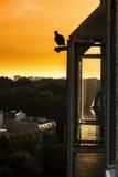 Silhouette noire de pigeon sur le toit Photographie stock libre de droits
